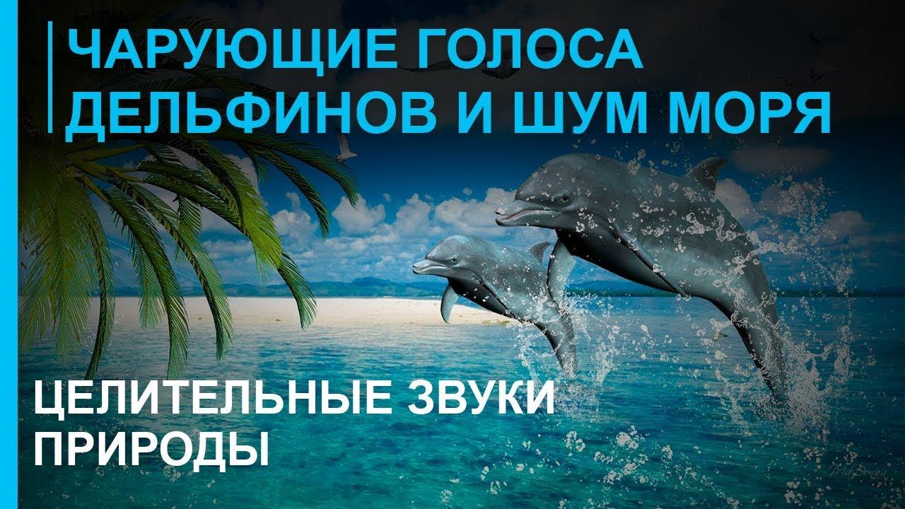 Звуки дельфинов скачать мп3