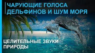 Звуки моря - Голоса дельфинов - Целительные Звуки Природы ☯  Релакс Музыка(Целительная Музыка - Звуки моря ☯ Голоса дельфинов - Гармонизация духовной энергии и телесный баланс..., 2013-03-24T06:55:45.000Z)