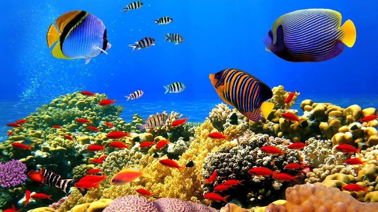 SAN HÔ TUYỆT ĐẸP dưới ĐẠI DƯƠNG ♦ Amazing Beauty of Underwater World