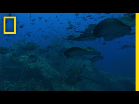 Sea Mounts | National Geographic