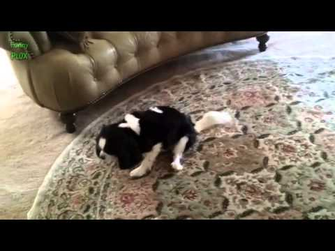 Funny Dogs Butt Scooting Compilation 2014 NEW HD