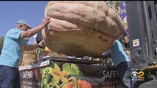 Giant Pumpkin Sets State Record At World Pumpkin Weigh-Off In Half Moon Bay