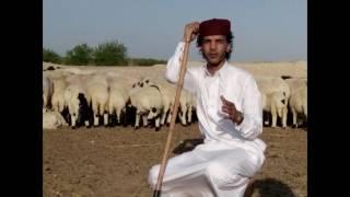 هشام بوخشيم الصوب مجرودة جديدة أحدث شئ في الفن البدوى قبل نزولها