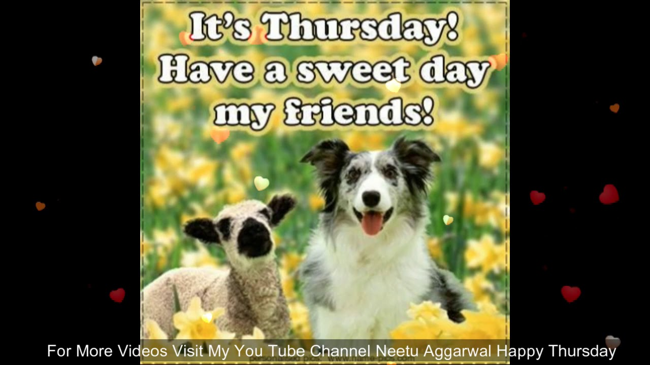 Funny Animal Happy Thursday Greetings