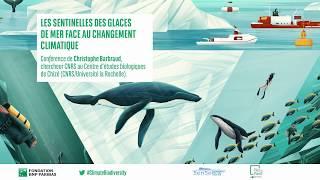 Les sentinelles des glaces de mer face au changement climatique