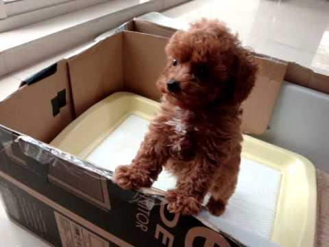 小狗狗看到點心的可愛反應
