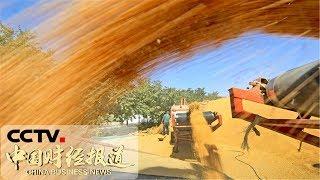 [中国财经报道] 丰收节里话丰收 湖北通山:大旱之年不减产 喜收水稻丰收田   CCTV财经