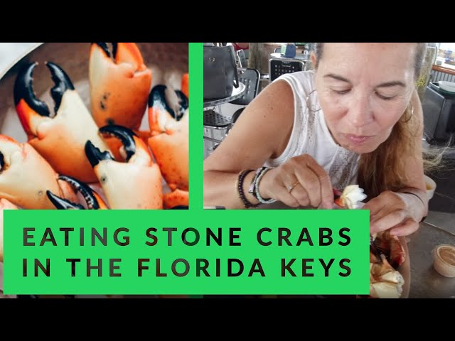 Eating Stone Crabs in the Florida Keys
