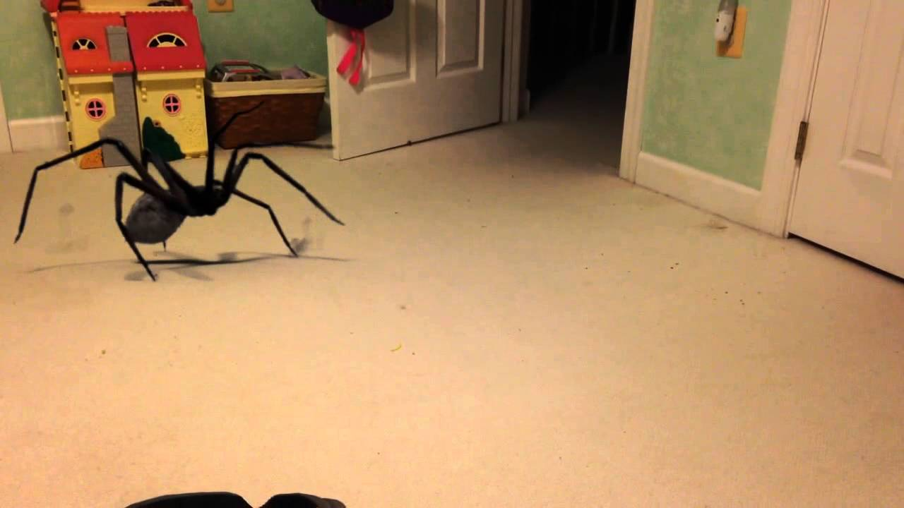 BIGGEST SPIDER EVER CAUGHT ON FILM 100% REAL! - YouTube