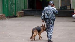 Эвакуация здания редакции «Новой газеты». Как это было