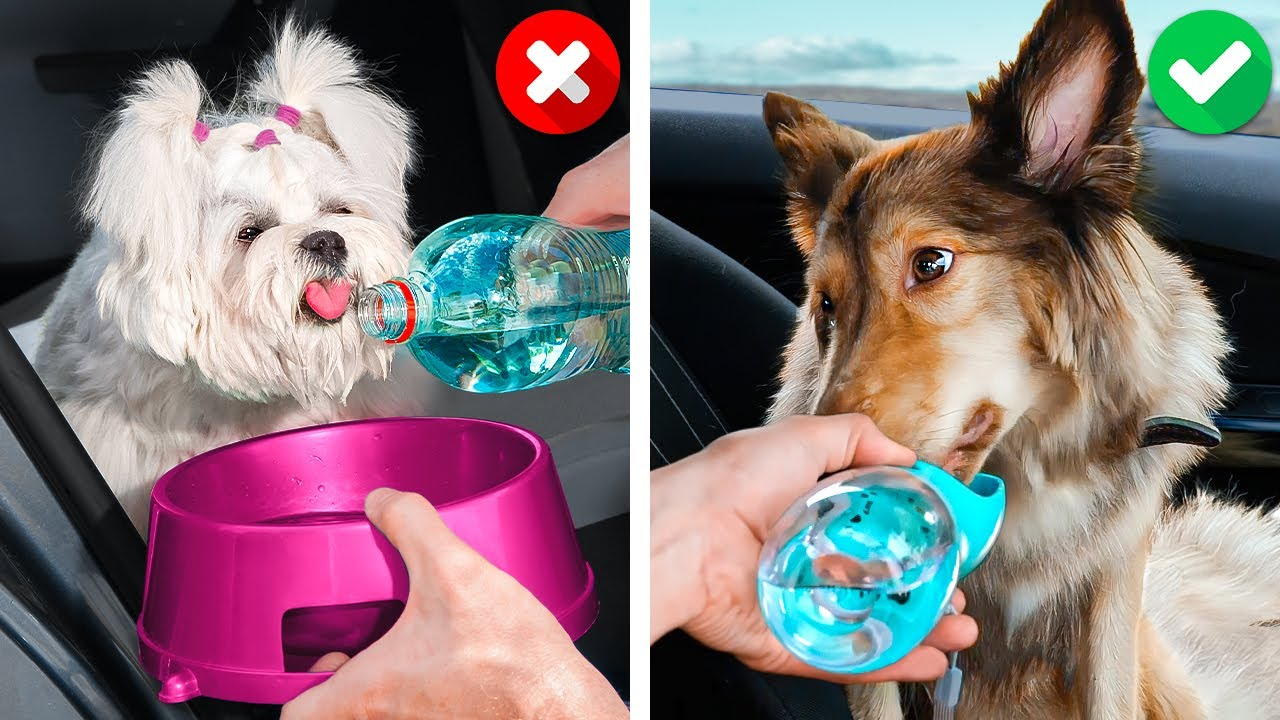 CUTEST DOG & CAT CRAFTS    Useful Pet Gadgets And Clever Hacks For Your Loved Ones