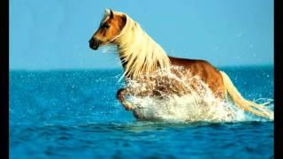 Лошади в океане (рыжий остров) музыкальный фото клип