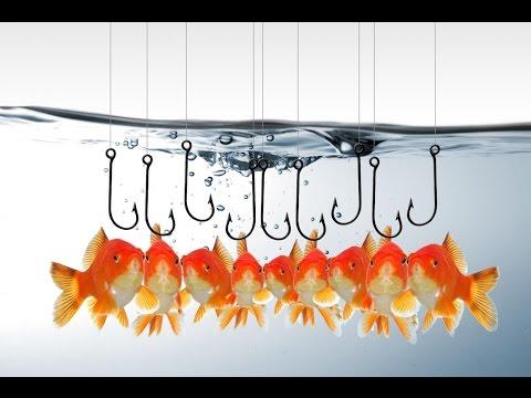 Стратегия Рыбалка - прибыльная стратегия торговли бинарными опционами