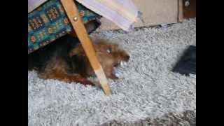 Злая собака(, 2013-04-11T14:53:02.000Z)