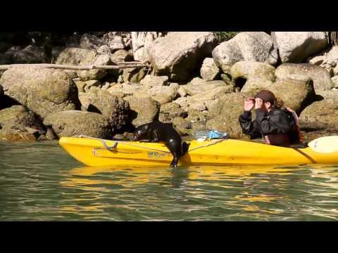 Abel Tasman National Park - The Sea Kayak Company