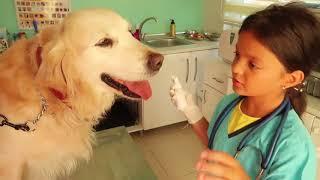Köpeğimiz Yaralandı Masal Veteriner Oldu! Masal Teaches Professions for Kids, pretend play funny dog