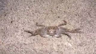 amazing crob - Sea Animals funny video