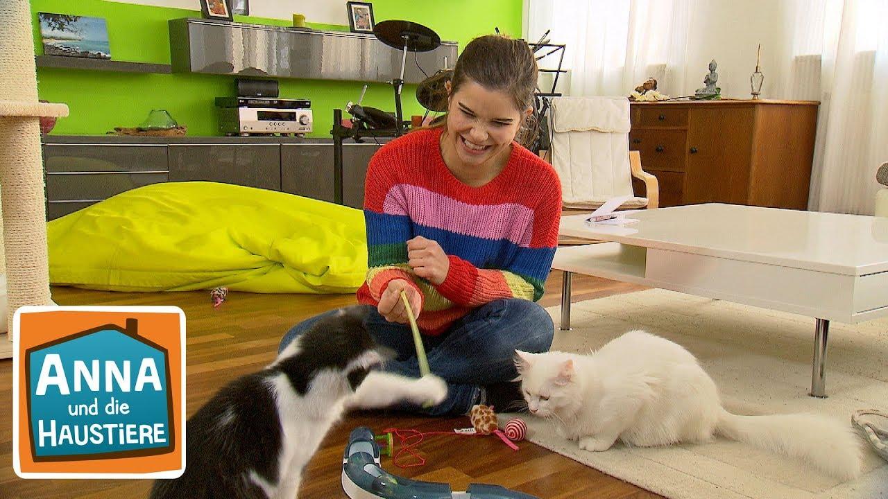 Tierheimkatze Information Fur Kinder Anna Und Die Haustiere Youtube