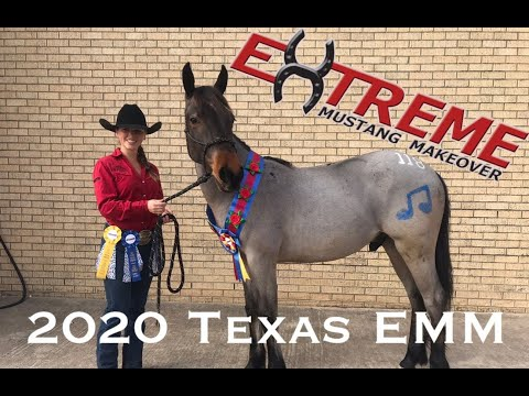 Extreme Mustang Makeover 2020 - Fort Worth, Texas