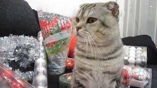 Покупки. Вибираємо Новорічні Іграшки і Ялинку. Vlog 1.12.2015