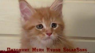 N1*SolarSong, кошка, красный мрамор