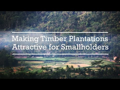 Making Timber Plantations Attractive for Smallholders