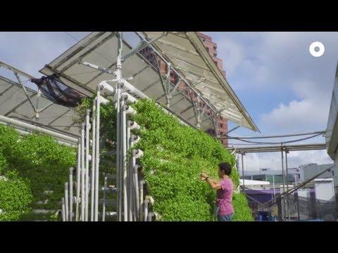 Urban Farm in Singapore's Busiest Shopping District