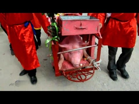 Vietnam: pig-slaughtering festival comes under fire