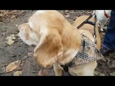 PSPO - Dog Control in Denbighshire