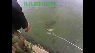 Карп весом 5 кг 200 гр. Рыбалка Херсон 14.09.2013