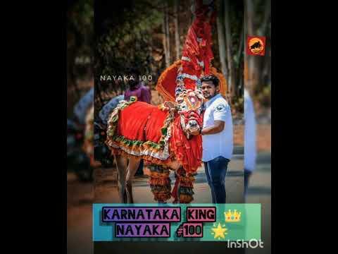 Karnataka KING-NAYAKA #100 👑
