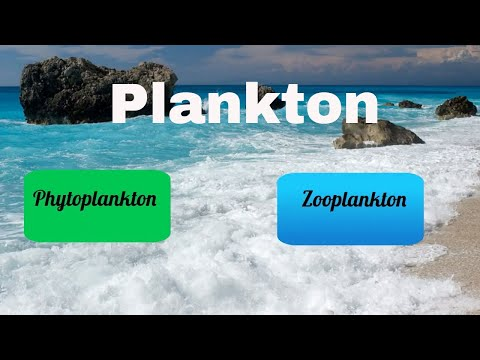 Difference between Zooplankton and Phytoplankton