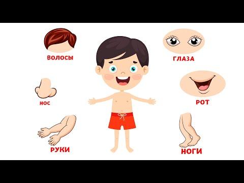 Части тела для детей Карточки Домана Развивающие мультики для детей