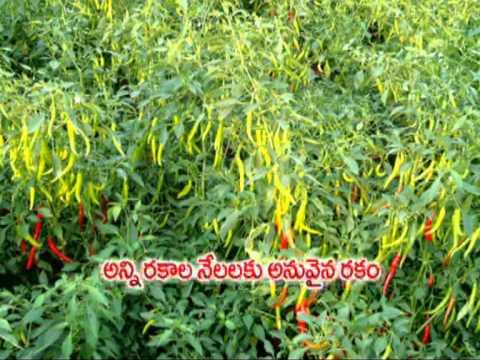 Bhairava Advt DVD FORMAT_01.mpg