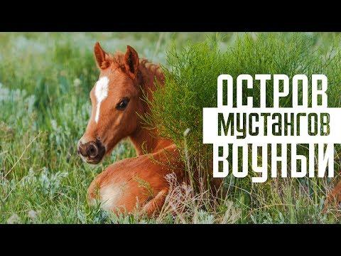 История появления дикого мустанга, повадки лошади