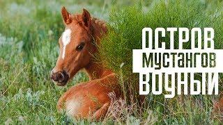 Download Остров Водный - территория мустангов | Дикие лошади озера Маныч-Гудило Mp3 and Videos