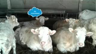 Présentation des animaux de la ferme