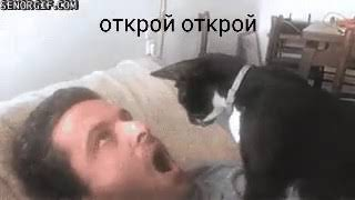 Кот лечит зуб у человека
