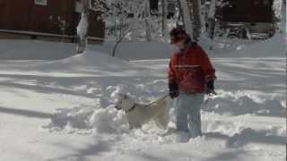 一日で31センチも積もりました!今年初の雪遊び?