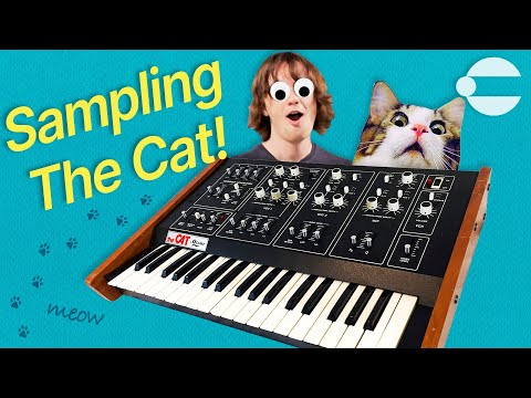 Sampling the Cat's Meow ? (FREE OCTAVE THE CAT SYNTHESIZER SAMPLE PACK)