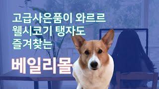 [베일리몰] 고급 사은품이 와르르!! 프리미엄 강아지 …