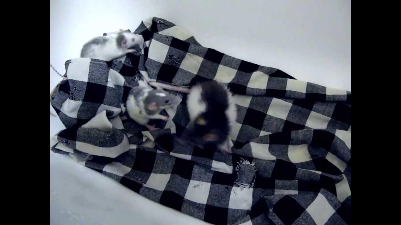 очкастая тетя в ванной