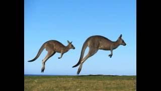 Животный мир Австралии(, 2016-06-08T07:52:04.000Z)