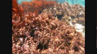 Смотреть клип песни: Сплин - Рыба без трусов