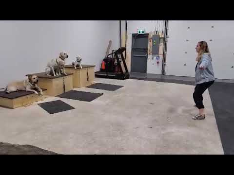 Can These Dogs Resist Her Dance Moves?   Aspen Service Dogs