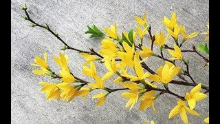ABC TV | How To Make Forsythia Paper Flower From Crepe Paper - Craft Tutorial