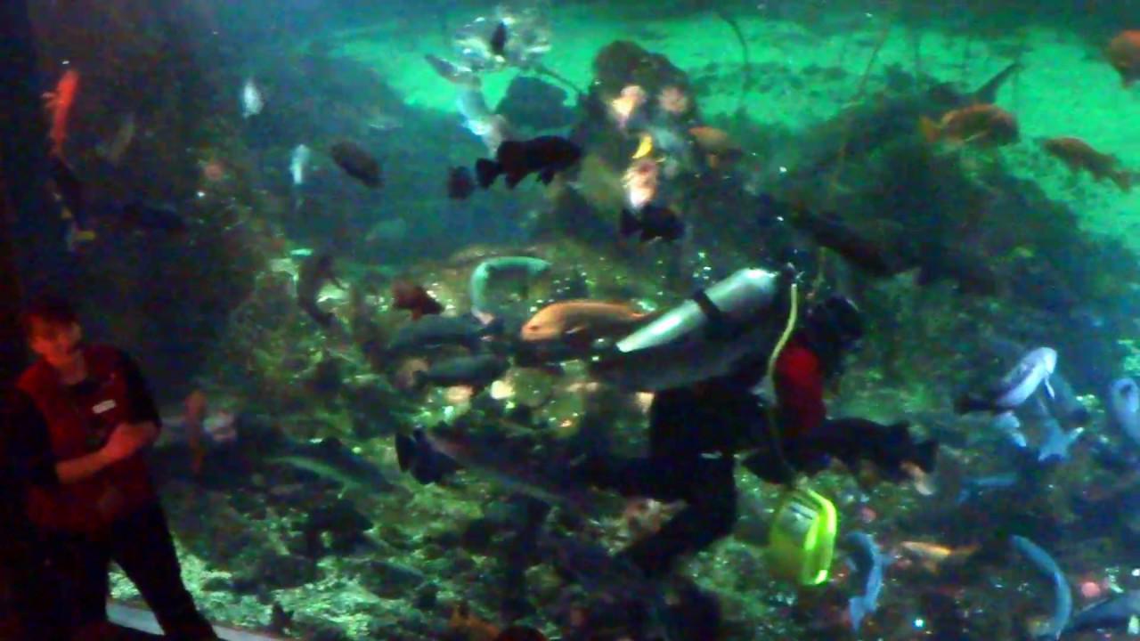 Fish aquarium vancouver - Feeding The Fishes In Huge Tank Vancouver Aquarium