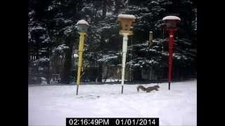 Squirrel Proof Bird Feeder Demo