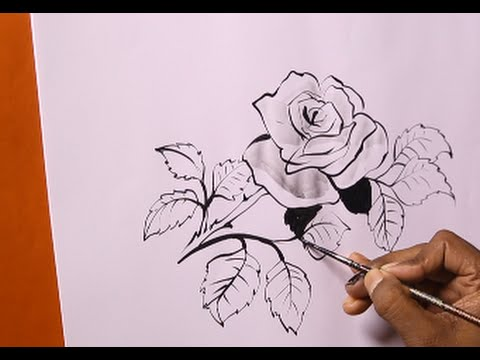 how to draw roses 50 best rose drawing tutorials