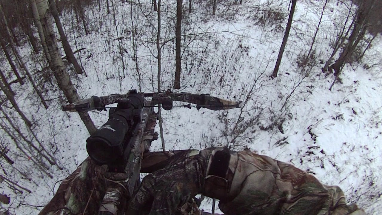 Deer hunting with Excalibur Micro Suppressor 355 fps  Canada